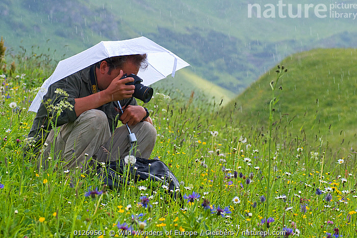 Photographer, Edwin Giesbers, under umbrella photographing flowers in alpine meadow in the rain for Wild Wonders of Europe mission, Liechtenstein, July 2009, ALPINE,ALPS,CAMERAS,EDWIN GIESBERS,EUROPE,FLOWERS,LANDSCAPES,LIECHTENSTEIN,MEADOWLAND,PEOPLE,RAINING,WWE,Grassland,Weather, Wild Wonders of Europe / Giesbers