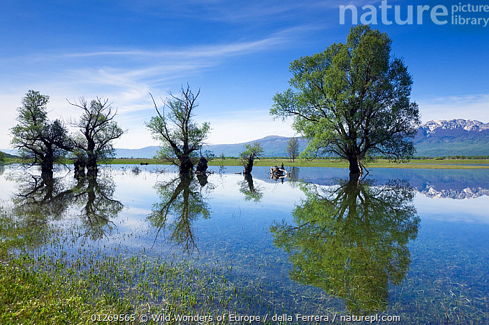 Trees, mainly White willow (Salix alba) in flooded karst plateau, Livanjsko Polje, Bosnia and Herzegovina, May 2009, BOSNIA AND HERZEGOVINA,DICOTYLEDONS,EASTERN EUROPE,ELIO DELLA FERRERA,EUROPE,FLOODS,LANDSCAPES,MOUNTAINS,PLANTS,REFLECTIONS,SALICACEAE,TREES,WATER,WETLANDS,WWE, Wild Wonders of Europe / della Ferrera