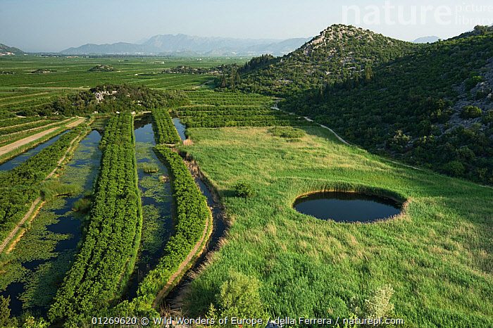 Cultivated part of the lower Neretva river delta with a sinkhole in marshland surrounded by Reeds (Phragmites sp) Dalmatia region, Croatia, May 2009  ,  AGRICULTURE,CROATIA,EASTERN EUROPE,ELIO DELLA FERRERA,EUROPE,GEOLOGY,GRAMINEAE,GRASSES,LANDSCAPES,MARSHES,MONOCOTYLEDONS,PLANTS,POACEAE,RIVERS,WETLANDS,WWE  ,  Wild Wonders of Europe / della Ferrera