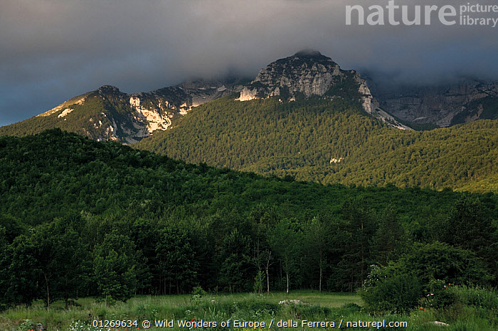 Mali Troglav (1,913m) surrounded by clouds in the Dinara mountain range, Bosnia and Herzegovina, May 2009  ,  BOSNIA AND HERZEGOVINA,CLOUDS,EASTERN EUROPE,ELIO DELLA FERRERA,EUROPE,FORESTS,LANDSCAPES,MOUNTAINS,WWE,Weather  ,  Wild Wonders of Europe / della Ferrera