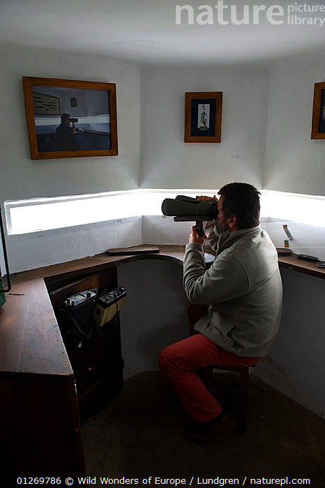 "The lookout ""vigia"" in his white tower looking for whales, Pico island, Azores, Portugal, June 2009, model released  ,  ATLANTIC ISLANDS,BINOCULARS,EUROPE,MAGNUS LUNDGREN,PEOPLE,PORTUGAL,VERTICAL,WWE,AZORES  ,  Wild Wonders of Europe / Lundgren"