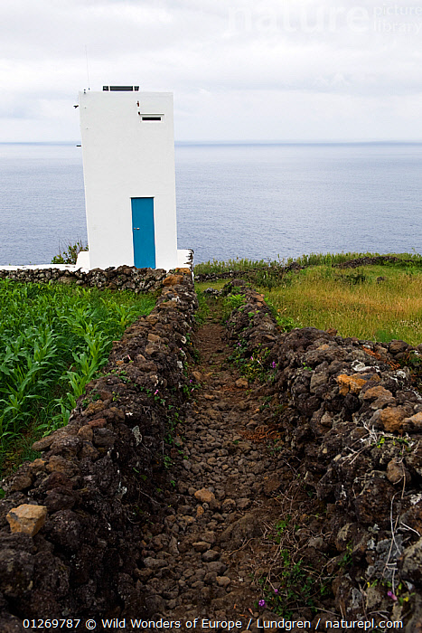 "The ""vigia"" tower on Pico island, a look out for spotting whales, Azores, Portugal, June 2009  ,  ATLANTIC,ATLANTIC ISLANDS,BUILDINGS,COASTS,EUROPE,LANDSCAPES,MAGNUS LUNDGREN,PORTUGAL,VERTICAL,WWE,AZORES,Marine  ,  Wild Wonders of Europe / Lundgren"