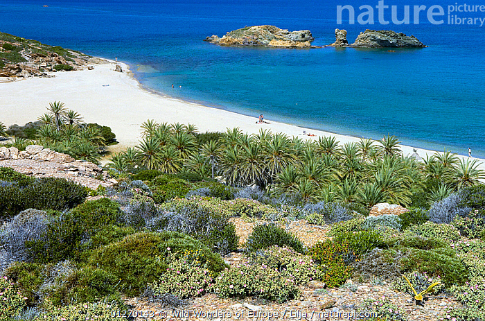 The palm beach in Vai, Crete, Greece, April 2009, BEACHES,COASTS,EUROPE,GREECE,LANDSCAPES,MEDITERRANEAN,PALMS,PETER LILJA,TREES,WWE,PLANTS, Wild Wonders of Europe / Lilja