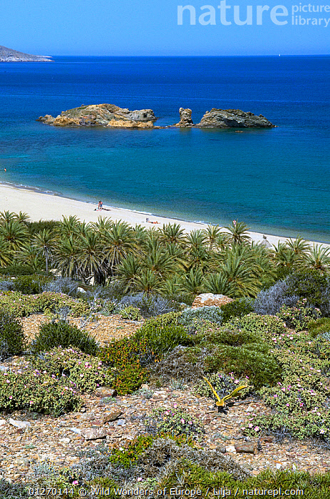 The palm beach in Vai, Crete, Greece, April 2009, BEACHES,COASTS,EUROPE,GREECE,LANDSCAPES,MEDITERRANEAN,PALMS,PEOPLE,PETER LILJA,PLANTS,ROCKS,TREES,VERTICAL,WWE, Wild Wonders of Europe / Lilja