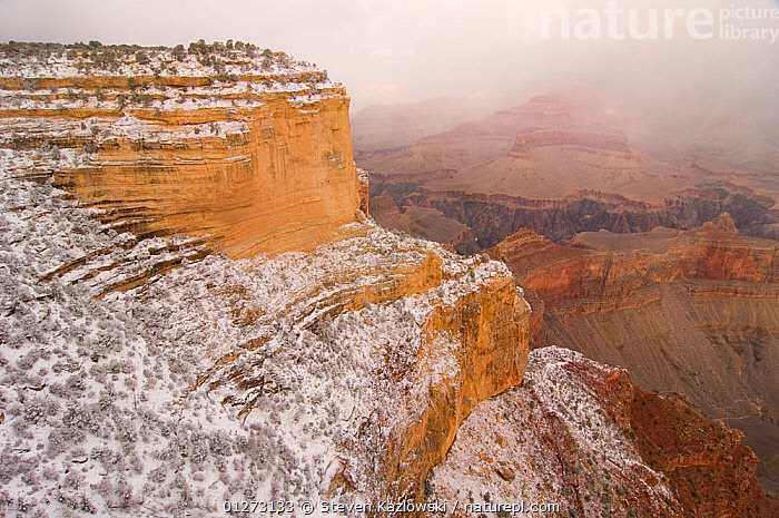 Nature Picture Library South Rim Of The Grand Canyon