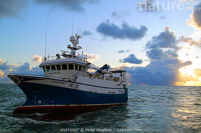 """Fishing vessel """"Harvester"""" trawling on the North Sea at dusk, January 2010.  ,  DUSK,EUROPE,FISHING BOATS,SUNSET,TRAWLERS,BOATS, WORKING-BOATS  ,  Philip Stephen"""