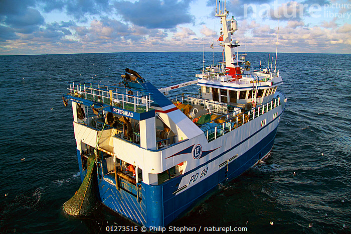 """""""Harvester"""" taking a good catch of Haddock onboard. North Sea, January 2010.  ,  COD,EUROPE,FISH,FISHING BOATS,HIGH ANGLE SHOT,MARINE,OSTEICHTHYES,PROCEDURES,REAR VIEWS,TRAWLERS,VERTEBRATES,BOATS, WORKING-BOATS ,core collection xtwox  ,  Philip Stephen"""