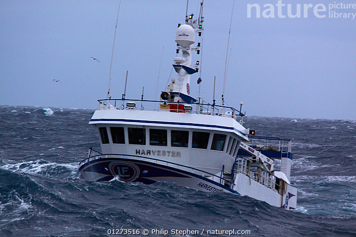 """Fishing vessel """"Harvester"""" in swell, North Sea, January 2010.  ,  EUROPE,FISHING BOATS,FRONT VIEWS,HEAVY SEAS,OBSCURED,TRAWLERS,BOATS, WORKING-BOATS  ,  Philip Stephen"""