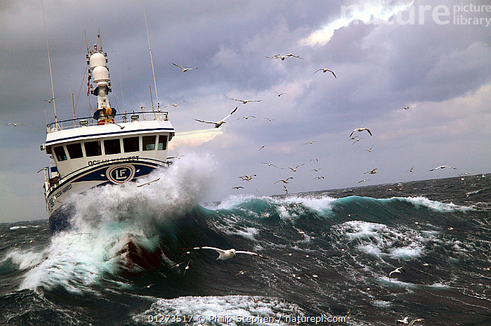 "Wave breaking over the bow of fishing vessel ""Ocean Harvest"" on the North Sea, January 2010.  ,  ADVENTURE,ANGLES,BIRDS,BOW WAVE,DRAMATIC,ENDURANCE,EUROPE,FISHING BOATS,FRONT VIEWS,GULLS,HEAVY SEAS,LARINAE ,POWERFUL,SEABIRDS,SPLASHES,SPRAY,TRAWLERS,CONCEPTS,BOATS,WORKING-BOATS ,core collection xtwox  ,  Philip Stephen"
