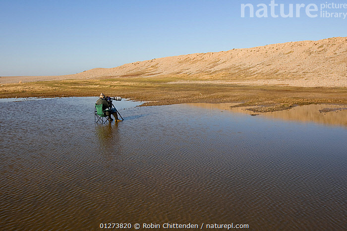 Bird photographer waiting in pool of water, Salthouse, Norfolk, England, February 2008  ,  BIRDWATCHING,EUROPE,LANDSCAPES,PEOPLE,UK,ENGLAND, United Kingdom  ,  Robin Chittenden
