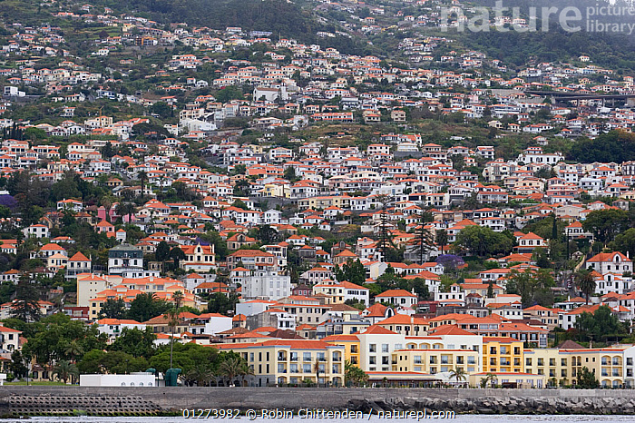 Funchal, Madeira, Portugal, May 2005  ,  BUILDINGS,CITIES,COASTS,EUROPE,LANDSCAPES,TOWNS  ,  Robin Chittenden