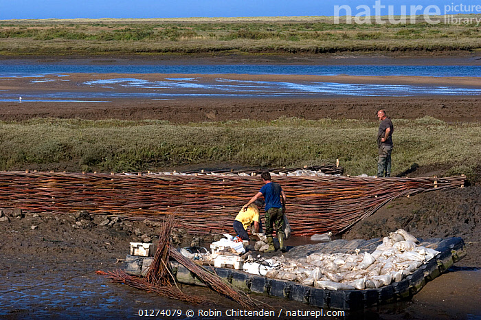 Coastal sea defence work, Burnham Overy Staithe, Norfolk, England, September 2006  ,  COASTS,ESTUARIES,EUROPE,FLOODING,LANDSCAPES,PEOPLE,RIVERS,SEA DEFENCES,UK,ENGLAND, United Kingdom  ,  Robin Chittenden