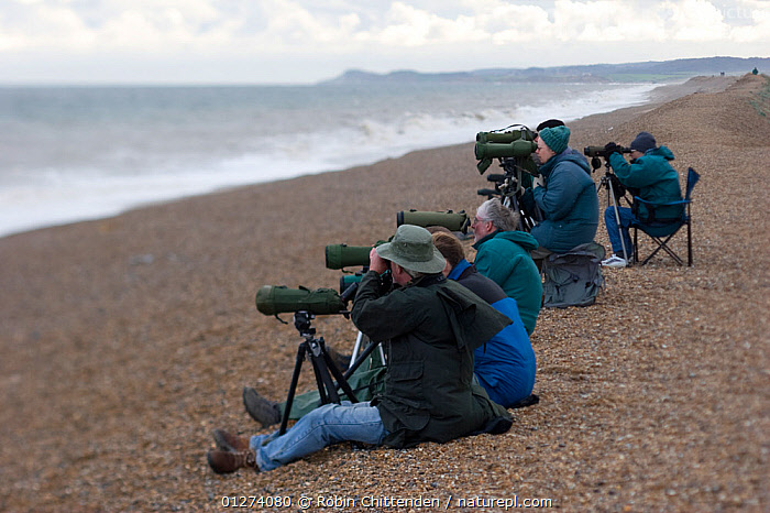 Birdwatchers watching the sea on beach, Cley, Norfolk, England, October 2006  ,  BEACHES,COASTS,EUROPE,GROUPS,OUTDOOR PURSUITS,PEOPLE,SEA,UK,ENGLAND, United Kingdom  ,  Robin Chittenden
