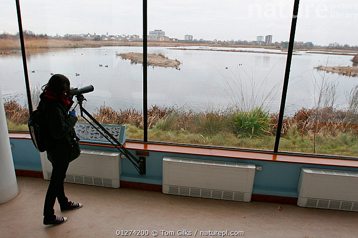 Viewing window at the Wildfowl and Wetland Trust's (WWT) London Wetland Centre with young woman birdwatching, London, UK, 2009  ,  BIRD WATCHING,BUILDINGS,CITIES,EUROPE,INDOORS,LAKES,PEOPLE,RESEARCH,RESERVE,UK,WETLANDS,ENGLAND,United Kingdom  ,  Tom Gilks