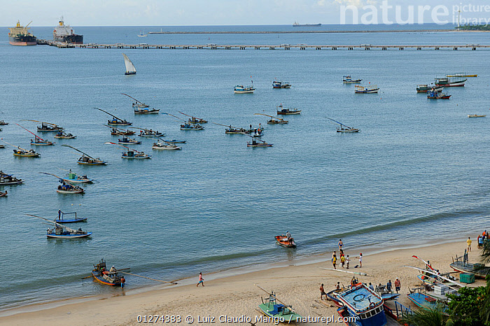 Rafts moored off Mucuripe Beach in Fortaleza city, Ceara� State, Northeastern Brazil. March 2009  ,  BEACHES,BOATS,BRAZIL,COASTS,HIGH ANGLE SHOT,LANDSCAPES,SAILING BOATS,SOUTH AMERICA,TOURISM,TRADITIONAL,SOUTH-AMERICA  ,  Luiz Claudio Marigo