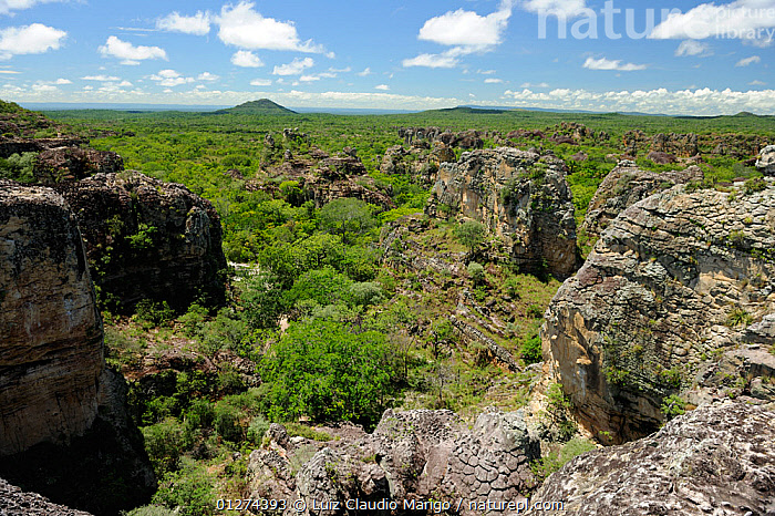 Rock formation created by erosion in Sete Cidades National Park, municipality of Piracuruca, Piaua� State, Northeastern Brazil. March 2009  ,  BRAZIL,EROSION,LANDSCAPES,NP,RESERVE,ROCK FORMATIONS,SOUTH AMERICA,National Park  ,  Luiz Claudio Marigo