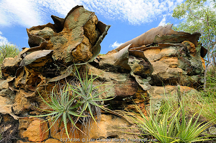 Rock formation created by erosion in Sete Cidades National Park, municipality of Piracuruca, Piaua� State, Northeastern Brazil. March 2009  ,  BRAZIL,LANDCAPES,NP,RESERVE,ROCK FORMATIONS,ROCKS,SOUTH AMERICA,National Park  ,  Luiz Claudio Marigo