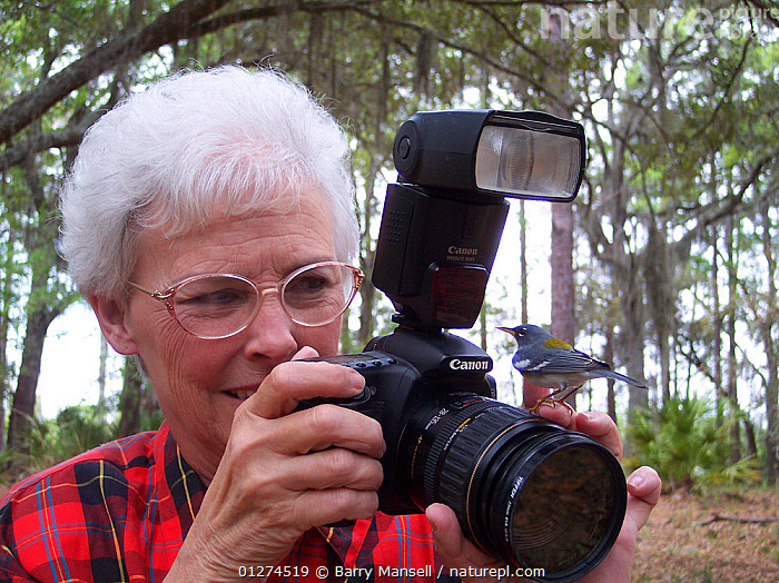 Northern parula (Parula americana) perched on the hand of a woman holding a camera, North Florida, USA, model released  ,  BIRDS, cameras, Curiousity, Flash, NORTH-AMERICA, PEOPLE, PHOTOGRAPHY, USA, VERTEBRATES, WARBLERS, WOMAN,North America  ,  Barry Mansell