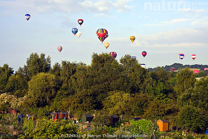 Bristol Balloon Fiesta over allotments, UK, August 2009.  ,  ALLOTMENT,BALLOONS,CITIES,EUROPE,EVENTS,FESTIVAL,GARDENS,LANDSCAPES,UK, United Kingdom  ,  Merryn Thomas