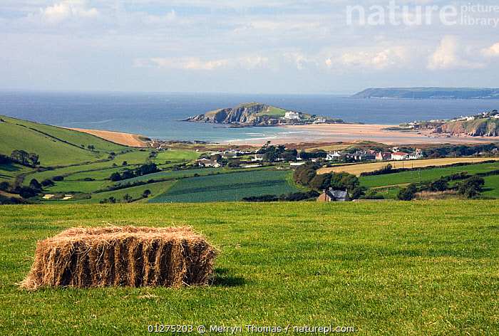 Hay bale in field overlooking Burgh Island, Thurlestone, South Devon. September 2009.  ,  COASTS,COUNTRYSIDE,EUROPE,FARMLAND,FIELDS,LANDSCAPES,SUMMER,UK, United Kingdom  ,  Merryn Thomas