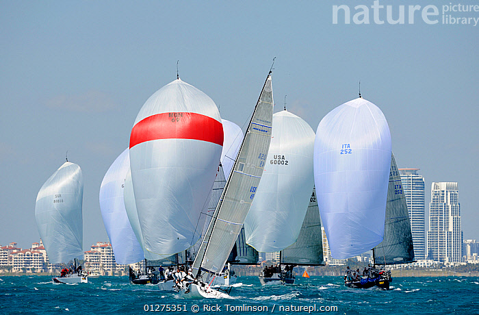 Farr 40 fleet downwind, Miami Grand Prix, Florida, USA. March 2010.  ,  CITIES,COASTS,DIFFERENT,DIRECTIONS,FARRS,FLEETS,FRONT VIEWS,NORTH AMERICA,RACING,REAR VIEWS,SAILING BOATS,SPINNAKERS,USA,YACHTS,BOATS,SAILING-BOATS,SAILS  ,  Rick Tomlinson