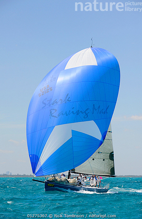 """J125 """"Stark Raving Mad"""" under spinnaker during the Miami Grand Prix, Florida, USA. March 2010.  ,  FRONT VIEWS,NORTH AMERICA,RACING,SAILING BOATS,SPINNAKERS,USA,VERTICAL,YACHTS,SAILS ,BOATS ,core collection xtwox  ,  Rick Tomlinson"""