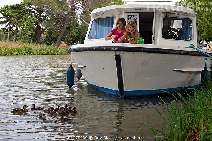 Girls feeding mallard ducks from a boat cruising on the Canal Du Midi near Capestang, Languedoc, France. July 2009. Model and property released.  ,  BIRDS,BOWS,CANALS,CHILDREN,CRUISING,DUCKLINGS,DUCKS,FEEDING,FRANCE,HOLIDAYS,LEISURE,LIFESTYLE,MOORED,MOTORBOATS,VERTEBRATES,WATERFOWL,Wildfowl, Waterfowl,Europe,Concepts,BOATS  ,core collection xtwox,BOAT-PARTS  ,  Billy Black