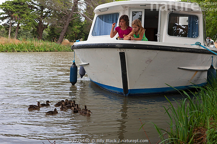 Girls feeding mallard ducks from a boat cruising on the Canal Du Midi near Capestang, Languedoc, France. July 2009. Model and property released.  ,  BIRDS,BOWS,CANALS,CHILDREN,CRUISING,DUCKLINGS,DUCKS,FEEDING,FRANCE,HOLIDAYS,LEISURE,LIFESTYLE,MOORED,MOTORBOATS,VERTEBRATES,WATERFOWL,Wildfowl, Waterfowl,Europe,BOATS  ,CONCEPTS  ,  Billy Black