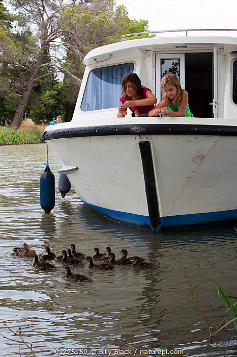 Girls feeding mallard ducks from the bow of a boat, cruising on the Canal Du Midi near Capestang, southern France. July 2009. Model and property released.  ,  BIRDS,BOWS,CANALS,CHILDREN,CRUISING,DUCKLINGS,DUCKS,EUROPE,FEEDING,FRANCE,HOLIDAYS,LEISURE,LIFESTYLE,MOORED,MOTORBOATS,VERTEBRATES,VERTICAL,WATERFOWL,Wildfowl, Waterfowl,BOATS  ,CONCEPTS ,core collection xtwox,BOAT-PARTS  ,  Billy Black