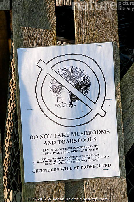 Sign  warning against that the picking of mushrooms or toadstools is forbidden, Richmond Park, London, UK  ,  CONSERVATION,EDIBLE,EUROPE,fence,FUNGI,FUNGUS,HARVESTING,SIGNS,UK,unlawful,VERTICAL,warnings,United Kingdom  ,  Adrian Davies