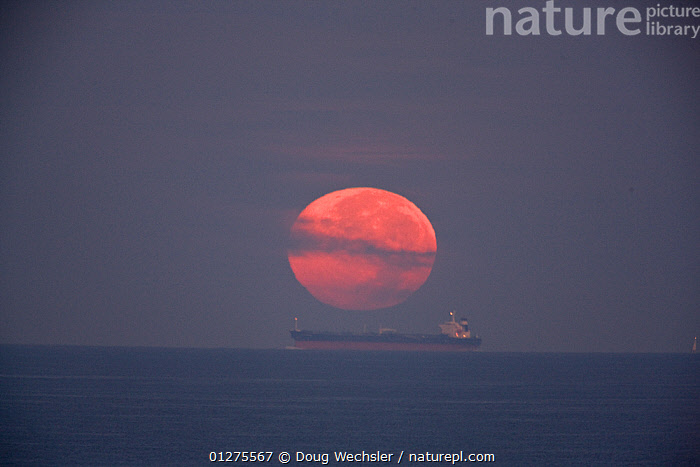 Full moon, looking red,  setting into the sea over a tanker on Delaware bay, New Jersey, Cape May, USA  ,  ATMOSPHERIC,BOATS,DAWN,FULL MOON,LANDSCAPES,MOON,PLANETS,SEASCAPES,USA,WEATHER,North America  ,  Doug Wechsler