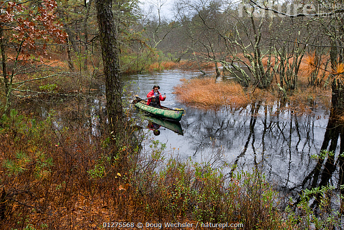 Person canoeing on Mullica River, Pine Barrens, New Jersey, USA, autumn  ,  AUTUMN,BOATS,CANOE,CANOING ,LANDSCAPES,LEISURE,NORTH AMERICA,PEOPLE,REFLECTIONS,RESERVE,RIVERS,USA,WATER,WOODLANDS  ,  Doug Wechsler