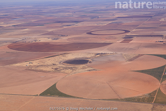 Aerial view of fields and temporary lake (playa) on high plains of Texas, USA, circles are the result of irrigation.  ,  AERIALS,AGRICULTURE,IRRIGATION,LAKES,LANDSCAPES,MONOCULTURE,NORTH AMERICA,USA,WETLANDS  ,  Doug Wechsler