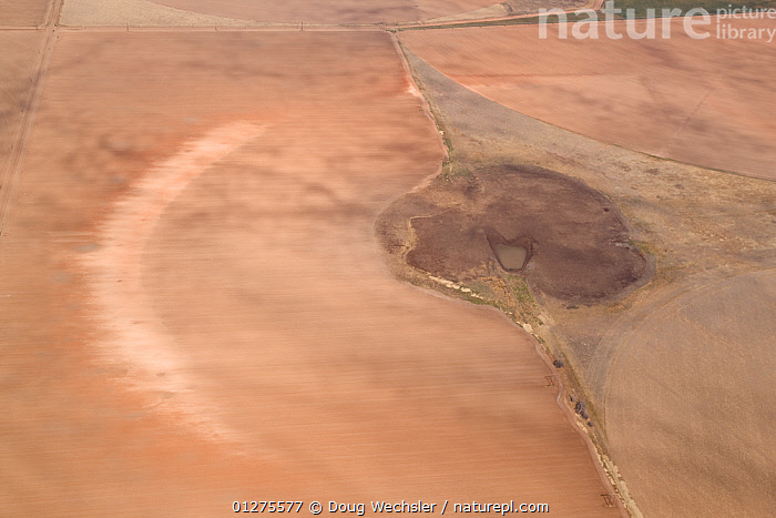Aerial view of high plains, temporary lake (playa) silted up by agriculture, Texas, USA  ,  AERIALS,AGRICULTURE,CROPS,ENVIRONMENTAL,LAKES,LANDSCAPES,NORTH AMERICA,USA  ,  Doug Wechsler