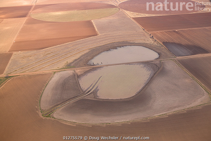 Aerial view of temporary lake (playa) in monoculture crop fields, high plains of Texas, USA  ,  AERIALS,AGRICULTURE,CROPS,LAKES,LANDSCAPES,MONOCULTURE,NORTH AMERICA,USA,WETLANDS  ,  Doug Wechsler