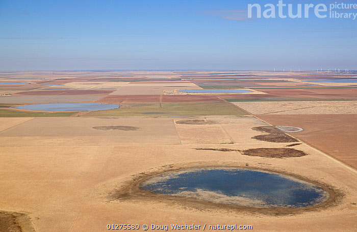 Aerial view of temporary lakes (playas) in monoculture crop fields, high plains of Texas, USA  ,  AERIALS,AGRICULTURE,LAKE,LAKES,LANDSCAPES,MONOCULTURE,NORTH AMERICA,PLAYA,USA,WATER,WETLANDS,WINTER  ,  Doug Wechsler