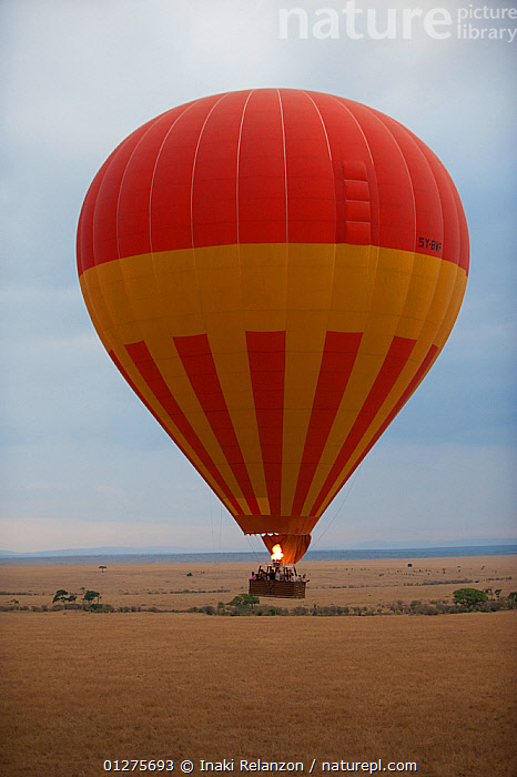Hot air balloon in Masai Mara National Reserve, Kenya, Africa. August 2009  ,  AFRICA,AIRCRAFT,BALLOONS,EAST AFRICA,LANDING,NP,RESERVE,TAKE OFF,TRAVEL,TRAVELLING,VERTICAL,National Park  ,  Inaki Relanzon