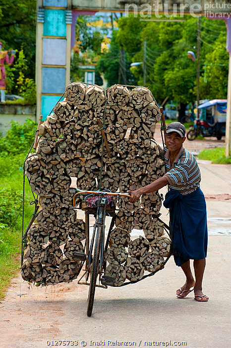 Firewood transportation on a bicycle, Bago, Myanmar / Burma.  August 2009  ,  ASIA,asian ethnicity,Bago,Balance,balancing,bicycle,bicycles,BURMA,Burmese ethnicity,CATALOGUE2,daily life,firewood,fire wood,flip flops,full length,handlebar,HARVESTING,holding,load,Logs,looking at camera,MAN,Myanmar,one person,overloaded,PEOPLE,ROADS,shorts,SMILING,SOUTH EAST ASIA,STANDING,Transport,transportation,VEHICLES,Wood  ,  Inaki Relanzon