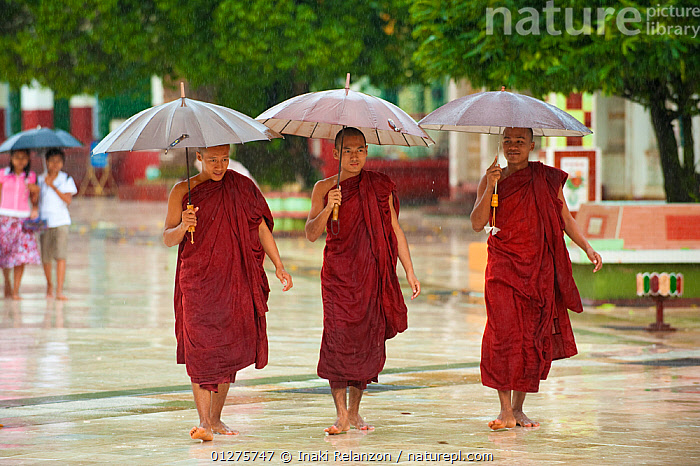 Monks holding umbrellas during  heavy monsoon rain, Bago, Myanmar, Burma  August 2009  ,  ACTION,ASIA,BUDDHISM,BURMA,MONKS,PEOPLE,RAIN,RAINING,SOUTH EAST ASIA,THREE,UMBRELLAS,URBAN,WALKING,WEATHER  ,  Inaki Relanzon