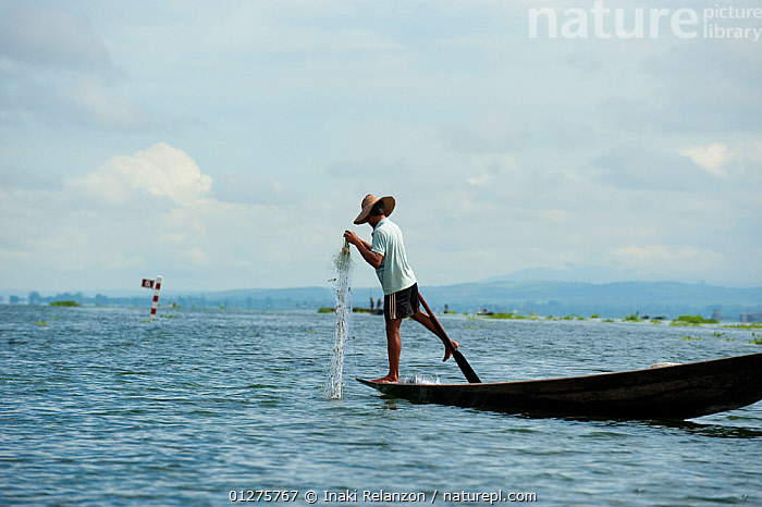 Traditional fisherman, with nets. These fishermen row their boats using their feet. Inle Lake, Shan State, Myanmar, Burma August 2009  ,  ASIA,BURMA,CULTURES,FISH,FISHING,INDUSTRY,NETS,RIVER,SOUTH EAST ASIA,TRADITION,TRADITIONS,WATER  ,  Inaki Relanzon