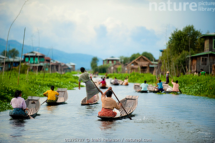 Traditional fishermen and women paddling in boats, in Inle Lake, Shan State, Myanmar (before Burma). August 2009  ,  ASIA,BOATS,BURMA,CULTURES,MEN,RIVERS,SOUTH EAST ASIA,TRADITIONS,VILLAGES,WOMEN,PEOPLE  ,  Inaki Relanzon