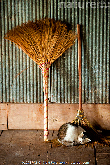 Dometic cat sleeping on brom in Buddhist  monastery, Inle Lake, Shan State, Myanmar, Burma. August 2009  ,  BROOM,BURMA,CATS,CLEANING,CULTURES,DOMETIC CAT,INDOORS,MAYANMAR,PETS,SOUTH EAST ASIA,TRADITIONS,VERTEBRATES  ,  Inaki Relanzon