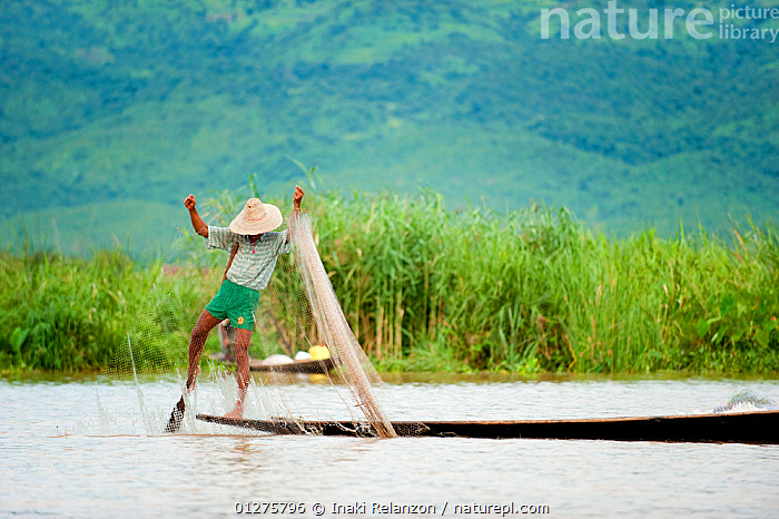Traditional fishermen with nets. These fishermen use their feet to row. Inle Lake, Shan State, Myanmar, Burma. August 2009  ,  ASIA,BOATS,BURMA,CULTURES,FISHING,INDUSTRY,LAKES,NETS,PEOPLE,SOUTH EAST ASIA,TRADITIONS,WATER  ,  Inaki Relanzon