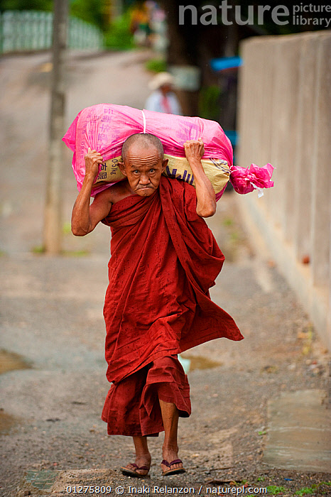 Elderly Buddhist monk in Nyaungshwe, carrying heavy load across his shoulders. Myanmar, Burma. August 2009  ,  ASIA,BURMA,CARRYING,CULTURES,EXPRESSIONS,MEN,MONKS,PEOPLE,RELIGIONS,SOUTH EAST ASIA,TRADITIONS,VERTICAL,WORKING  ,  Inaki Relanzon