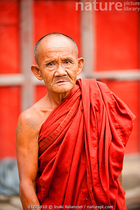 Portrait of an elderly Buddhist monk in Nyaungshwe,  Myanmar,  Burma. August 2009  ,  ASIA,BURMA,CULTURES,EXPRESSIONS,MEN,MONKS,PORTRAITS,RED,RELIGIONS,SOUTH EAST ASIA,TRADITIONS,VERTICAL  ,  Inaki Relanzon
