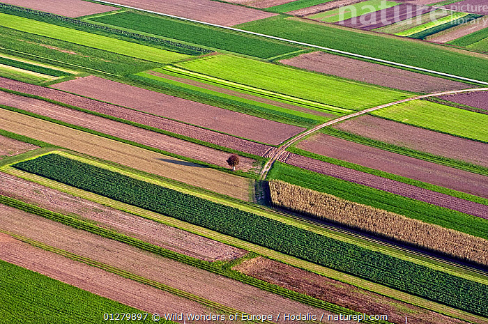 Aerial view of fields near the city of Kranj, Slovenia, October 2002  ,  AERIALS,AGRICULTURE,ARNE HODALIC,EUROPE,LANDSCAPES,PATTERNS,WWE  ,  Wild Wonders of Europe / Hodalic