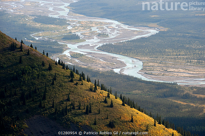 Silverberry River, Backbone Range, Mackenzie Mountains, Northwest Territories, Canada, aerial view,AERIALS,Backbone Ridge,CANADA,CATALOGUE2,DRAMATIC,elevated view,HIGH ANGLE SHOT,hillside,LANDSCAPES,MAckenzie Mountains,Nobody,NORTH AMERICA,Northweat Territories,outdoors,river,RIVERS,Scenics,Silverberry river,Tree,WETLANDS, Patricio Robles Gil