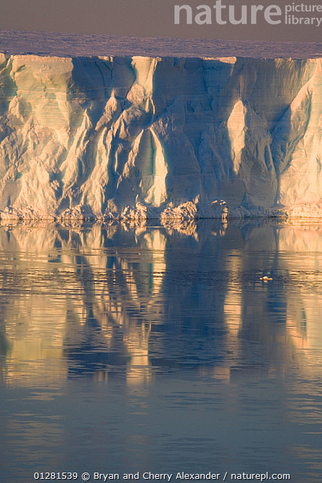 Iceberg and grease ice reflecting in the Weddell Sea at sunset. Antarctica, October 2006.  ,  ANTARCTICA,FORMATIONS,ICEBERGS,LANDSCAPES,PEACEFUL,POLAR,REFLECTIONS,SEA,SUNSET,VERTICAL,WEDDELL SEA,Concepts  ,  Bryan and Cherry Alexander