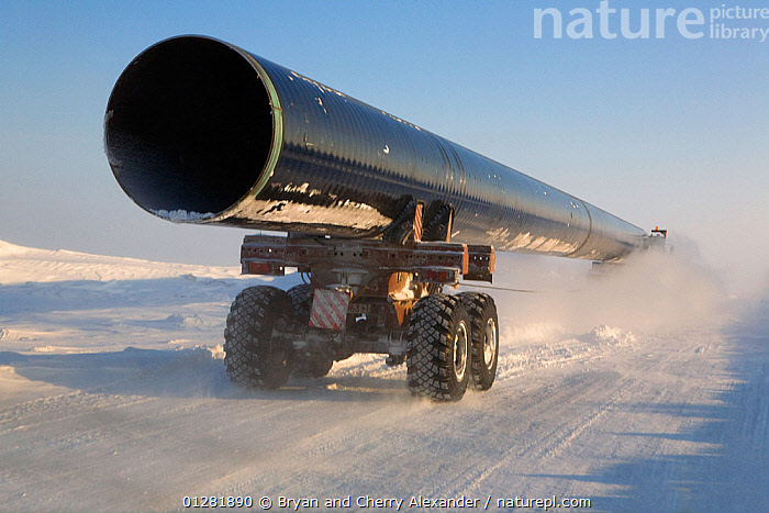 Truck carrying large section of gas pipe on a winter road near the Yurharovo gas field. Noviy Urengoi, Yamal, Western Siberia, Russia., ARCTIC,ASIA,CONSTRUCTION,DEVELOPMENT,ENERGY,FUEL,INDUSTRY,lorries,pipes,ROADS,RUSSIA,Siberia,VEHICLES,CIS, Bryan and Cherry Alexander