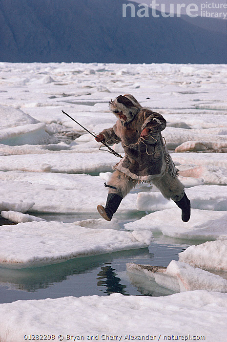 Inuit hunter jumping from one ice floe to another. Ellesmere Island, Nunavut, Canada, 1994., ARCTIC,CANADA,COASTS,FISHING,HUNTING,ICE,JUMPING,LEAPING,MAN,NORTH AMERICA,PEOPLE,SEA,TRIBES,VERTICAL, Bryan and Cherry Alexander